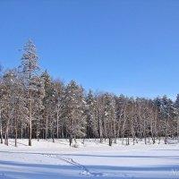 Зимние просторы :: Лидия (naum.lidiya)