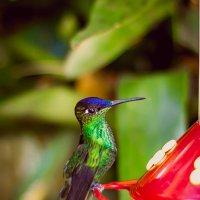 Колибри на водопое :: Николай Бакс