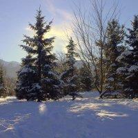 Утро,красит нежным светом... :: Сергей Савич.