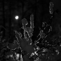 Просто зима... :: НикЛеод