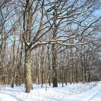 Деревья в зимнем лесу :: Татьяна