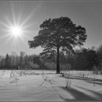 Мороз и Солнце! :: Владимир Холодный