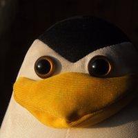 Шкипер. :: сергей лебедев
