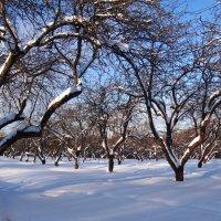 яблоневый сад зимой :: Валентина. .