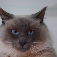 Мой кот. :: Елена