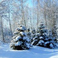 Лесные красавицы :: Anna P