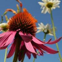 Вальс цветов :: Вера Андреева