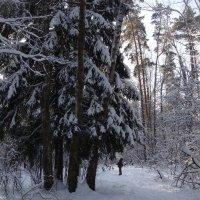 Зимняя красота. :: Antonina