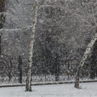 снег :: Жанна