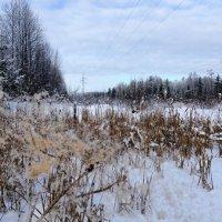 Зима в свой красе. :: Виктория Чурилова