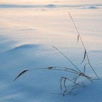 Травинки на заснеженном поле в последних лучах солнца :: Михаил Онипенко
