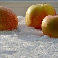 Яблоки в снегу :: Валерий Лазарев