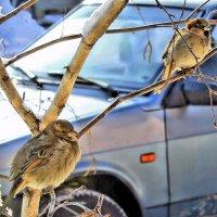 Заманчивая птица, свободный воробей. :: Валентина ツ ღ✿ღ
