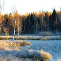 Раннее морозное утро :: Anna P