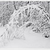 Зимние этюды :: Любовь Чунарёва