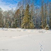 Зимний лес. :: Виктор Евстратов