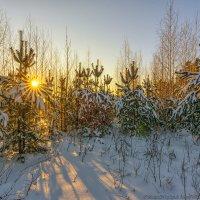 Лесной хоровод :: Валерий Горбунов
