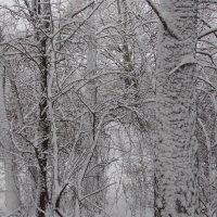 февраль :: владимир