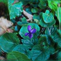 первый цветочек января..... :: Юрий Владимирович