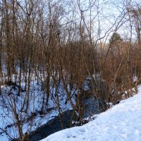 Январь,прогулка в лесопарке... :: Тамара (st.tamara)