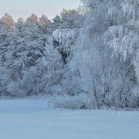 Сказочный лес.. :: Юрий Анипов