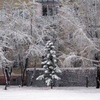 Заснежило осенью. :: Мила Бовкун