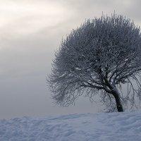 Дерево зимой :: VL