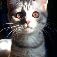 Что думает Ваша кошка? :: Marina