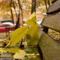 осень в Киеве. :: Стас