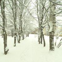 аллея :: Михаил Жуковский