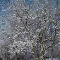 Зима в Архангельске :: Алёна Михеева