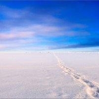 Картинка про зимний минимализм... :: Александр Никитинский
