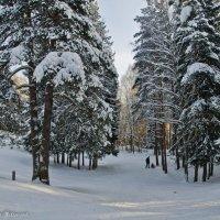 Отдых в зимнем лесу. :: Виктор Евстратов