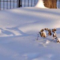 тени на снегу... :: Валентина. .