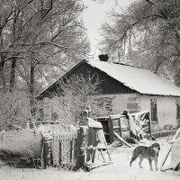 В деревне. :: Оксана Коваленко