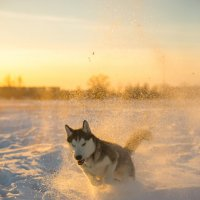 Моя собака :: Рома Даниленко