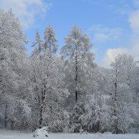 Зимняя сказка :: Марина Кит