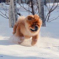 Ура! Зима! :: Оксана Федосенко
