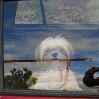 За окном машины :: Виктор Шандыбин