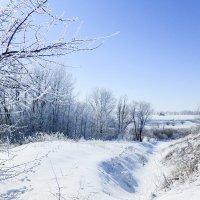 чудесный зимний день :: татьяна