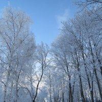 В зимнем парке :: Вера Щукина