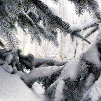 Голубые ели :: Милешкин Владимир Алексеевич