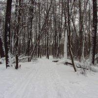 Зимние будни парка :: Андрей Лукьянов