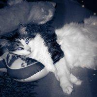 Кот подошел, прижался своим холодным носом к моему лбу и замер. Наверное, что-то скачивает... :: Наталья Александрова