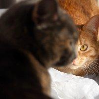 Рыжка и Тяна (фото 06) :: Алла Багрий (ник Cowberry)