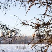 Красноярск :: Виктория Большагина