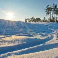 Солнечный январь :: Svetlana Kravchenko