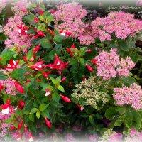 Розовые цветы :: Nina Yudicheva