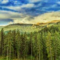 forest :: Vadim Zharkov
