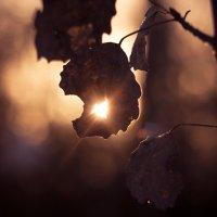 Солнце :: Андрей Волков